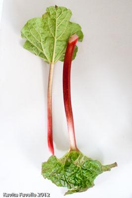 RhubarbMarch2012-9895