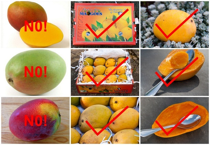 how to properly cut and eat a mango