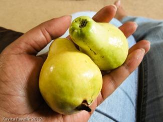 Fruit-1151