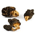 JC-dried-mushrooms-morels
