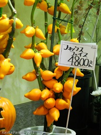 Japan2012-2587