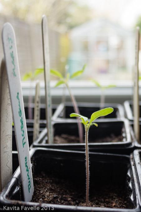 Seedlings-4970