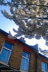 Blossom2013-Apr-23-0407