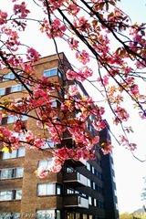 Blossom2013May2-0439