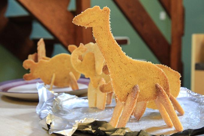 safaricookiesMattGibson1