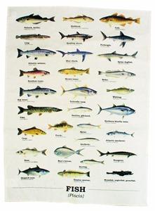 ecologie fish