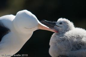 KVEats Falklands-2219