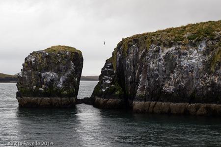 Viking-Sushi-Boat-Excursion-Stykkisholmur-Iceland-(c)KavitaFavelle-7392