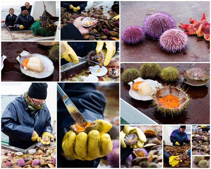 Viking-Sushi-Collage-KaveyEats-(c)KavitaFavelle2014