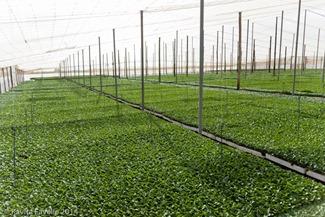 Agromark-Murcia-(c)KavitaFavelle-2014-9012