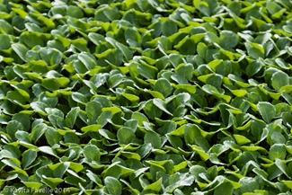 Agromark-Murcia-(c)KavitaFavelle-2014-9014