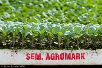 Agromark-Murcia-(c)KavitaFavelle-2014-9015