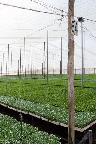 Agromark-Murcia-(c)KavitaFavelle-2014-9028