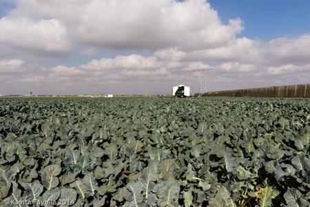 Agromark-Murcia-(c)KavitaFavelle-2014-9052