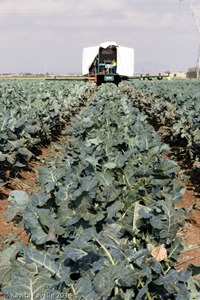 Agromark-Murcia-(c)KavitaFavelle-2014-9054