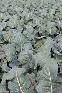 Agromark-Murcia-(c)KavitaFavelle-2014-9058