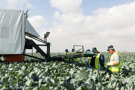 Agromark-Murcia-(c)KavitaFavelle-2014-9065