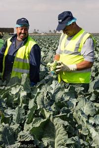 Agromark-Murcia-(c)KavitaFavelle-2014-9068
