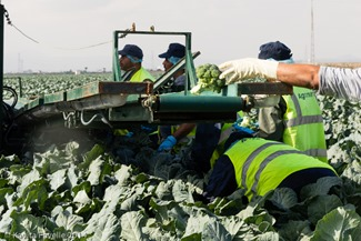 Agromark-Murcia-(c)KavitaFavelle-2014-9076