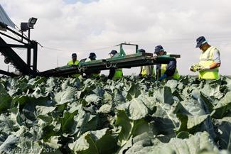 Agromark-Murcia-(c)KavitaFavelle-2014-9084