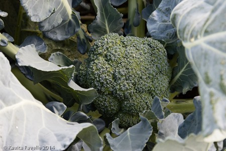 Agromark-Murcia-(c)KavitaFavelle-2014-9099