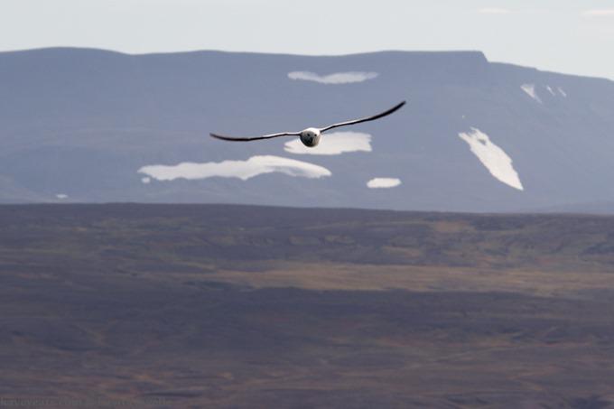 Iceland-2014 - KaveyEats (c)KavitaFavelle-7549