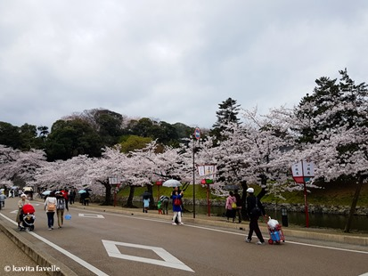 Sakura Season in Hikone Japan on Kavey Eats-132602