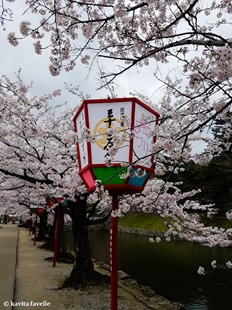 Sakura Season in Hikone Japan on Kavey Eats-132723