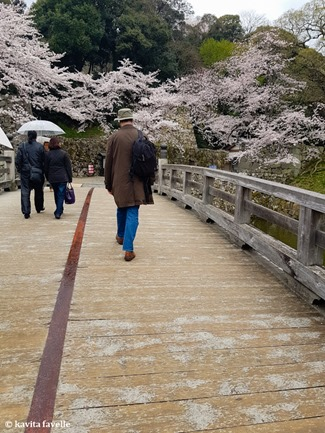Sakura Season in Hikone Japan on Kavey Eats-132836