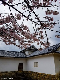 Sakura Season in Hikone Japan on Kavey Eats-141511