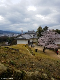 Sakura Season in Hikone Japan on Kavey Eats-142654