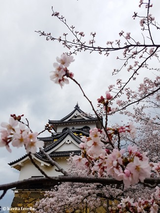 Sakura Season in Hikone Japan on Kavey Eats-143605