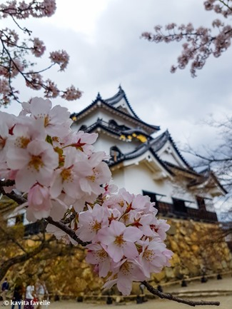 Sakura Season in Hikone Japan on Kavey Eats-144130
