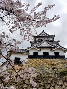 Sakura Season in Hikone Japan on Kavey Eats-144935