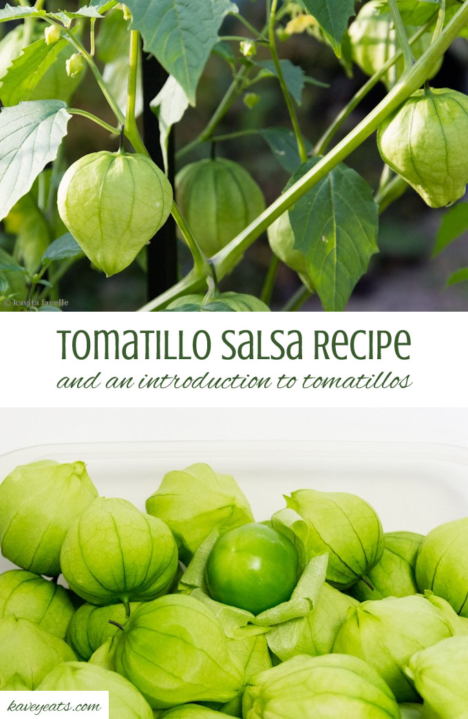 Tomatillo Salsa and an introduction to tomatillos