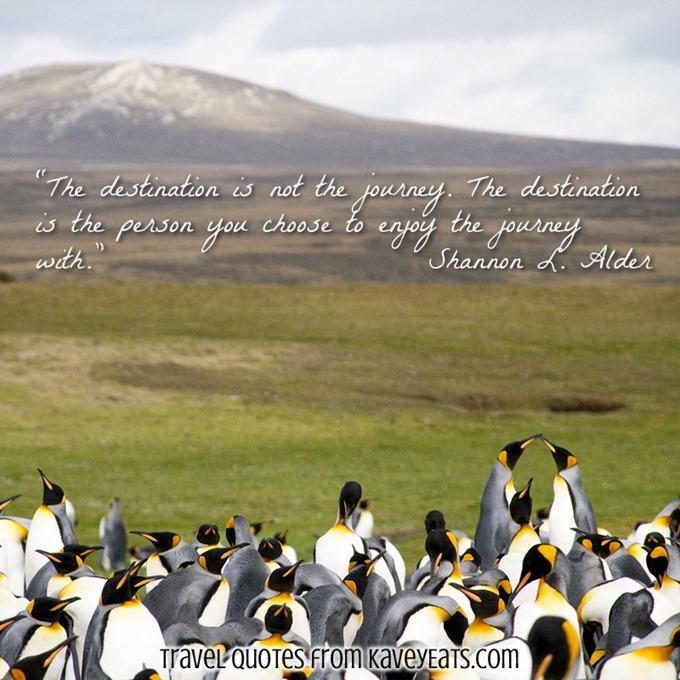 Aptenodytes patagonicus (King Penguin)