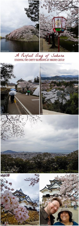 Collage Hikone Castle Sakura Blossom