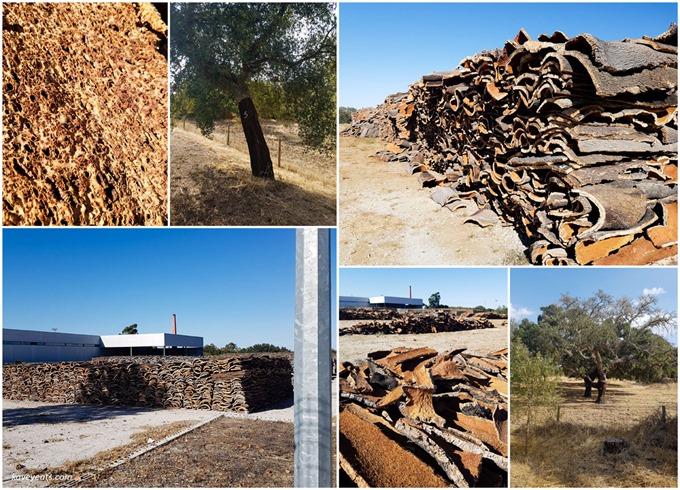 Alentejo cork farming