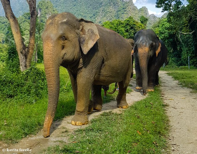 Ethical Elephant Tourism