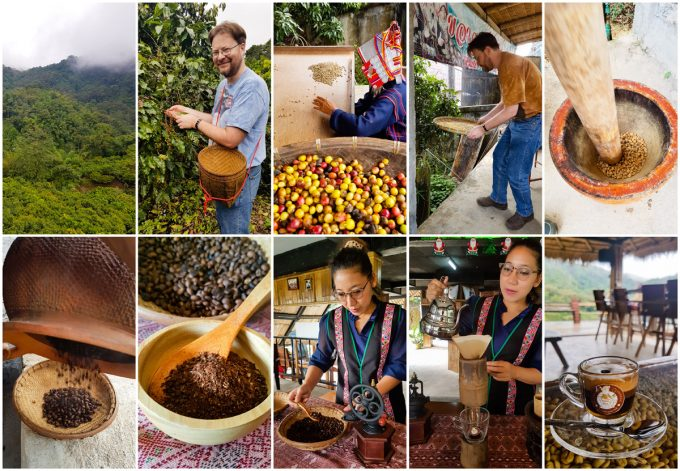 Coffee picking and processing, part of a two day visit to the Akha Hill Tribe of Thailand's Doi Pha Mee, on Kavey Eats