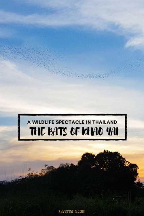 The wildlife spectacle of the Bat Caves of Khao Yai in Thailand (Kavey Eats)