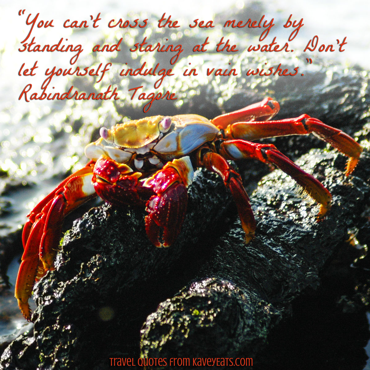 "Sally Lightfoot Crab in Galapagos Islands - ""You can't cross the sea merely by standing and staring at the water. Don't let yourself indulge in vain wishes."" ~ Rabindranath Tagore"