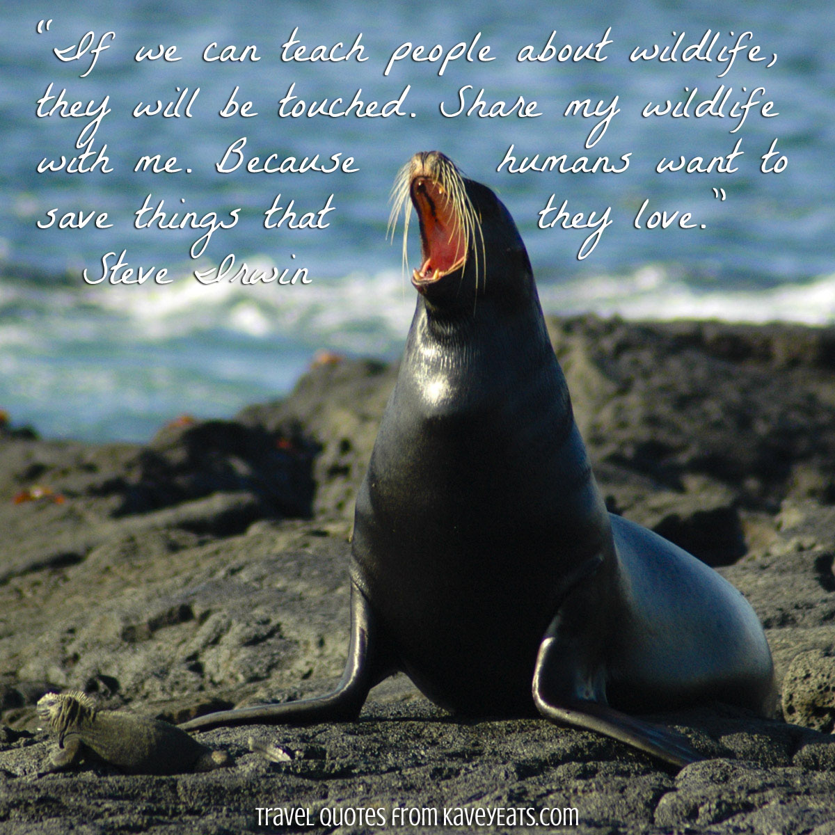 """Sea lion on rocky shore in Galapagos Islands - """"If we can teach people about wildlife, they will be touched. Share my wildlife with me. Because humans want to save things that they love."""" ~Steve Irwin"""