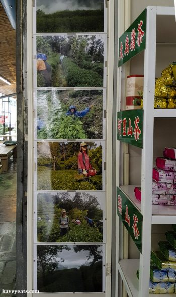 Taiwanese Oolong Tea - The Best Souvenirs to Buy in Taiwan