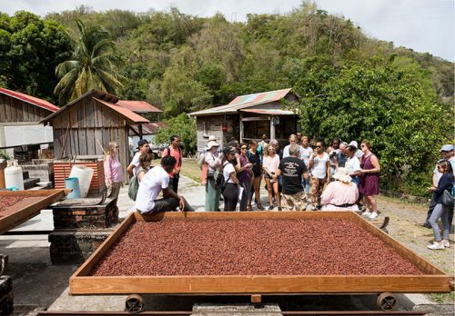 Cocoa farming and processing at Crayfish Bay in Grenada