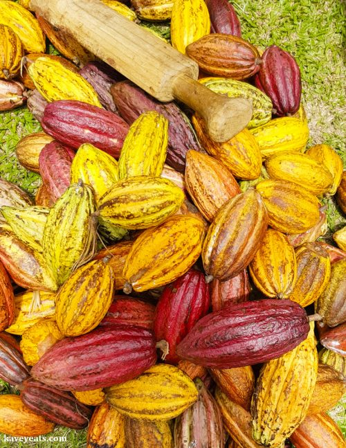 Cocoa Pods, just harvested from the tree, Grenada