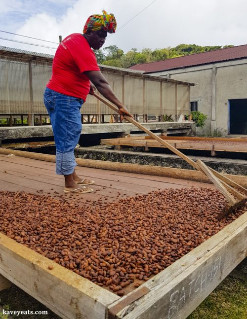 Processing Cocoa at Belmont Estate, Grenada