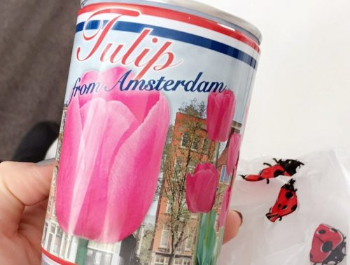 Tulip in a can from Amsterdam, Netherlands
