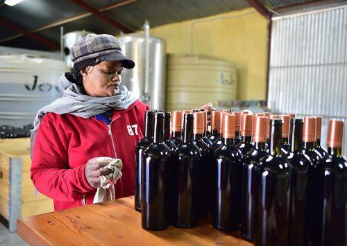 Die Mas vineyard, Upington, Cape Wine Route