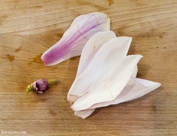 Magnola flower petals